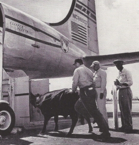 Cargo-1